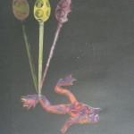 žába, 50x70cm